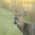 Two Point Buck by Jim Lepard