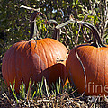 Two Pumpkins by Sharon Talson