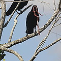 Two Raven With A Snake by Christiane Schulze Art And Photography