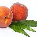 Two Ripe Peaches And Leaves by Rosemary Calvert