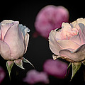 Two Roses And A Fly by Tomasz Dziubinski
