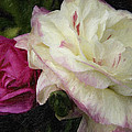 Two Roses by David Allen Pierson