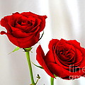 Two Roses by Mary Deal