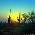 Two Saguaro by Brian Lambert
