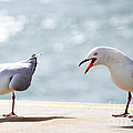 Two Seagulls by Yew Kwang