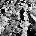 two sets of fresh footprints crossing deep snow in field Forget Saskatchewan Canada by Joe Fox