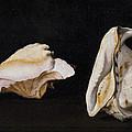 Two Shells by Filippo Napoletano