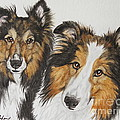 Two Shelties by Megan Cohen