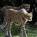 Two Sisters Hunting by Ken Frischkorn
