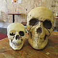 Two Skulls - At The Cafe by David Lovins