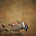 Two Sparrows by Heike Hultsch
