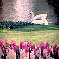 Two Swans by Jasna Buncic