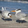 Two Terns Talking by Ellen Meakin
