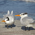 Two Terns Watching by Ellen Meakin