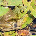 Two Toned Frog by Rick Rauzi
