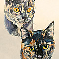 Two Torti's by Susan Herber
