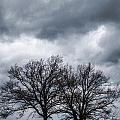Two Trees Beneath A Dark Cloudy Sky by Amy Cicconi