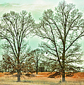 Two Trees by Paulette B Wright