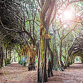 Two Tunnels Taxus by Semmick Photo
