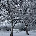 Two Winter Trees by Carol Groenen