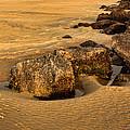 Tybee Island by Diana Powell