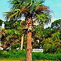 Tybee Palm by Tara Potts