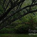 Tyler Tree 1 by Heather Jane