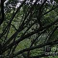 Tyler Tree 2 by Heather Jane