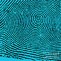 Typical Whorl Pattern, 1900 by Science Source