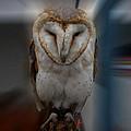 Typo Alba Owl Spain  by Colette V Hera  Guggenheim