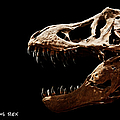 Tyrannosaurus Rex Skull 4 by Weston Westmoreland