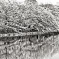 Ueno Park Sakuara by For Ninety One Days