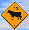 Ufo Cattle Crossing Sign In New Mexico by Catherine Sherman