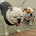 Uga And Cindy by Donna Brown