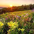 Uinta Wildflowers by Emily Dickey