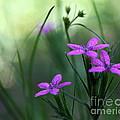 Ultra Violet by Neal Eslinger