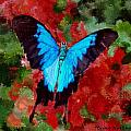 Ulysses Butterfly by Bruce Nutting