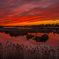 Umatilla Refuge Sunset  -  150218a-226 by Albert Seger