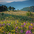 Umbria Wildflowers by Brian Jannsen