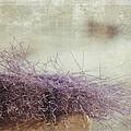Unbearable Softness by Zina Zinchik