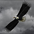 Under The Double Eagle by Leslie Reagan -  Joy To The Wild Photos