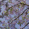 Under The Jacaranda Tree by Rona Black