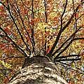 Under The Leaves by Teresa Schomig