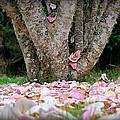 Under The Magnolia Tree by Katie Wing Vigil