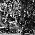 Under The Oaks by Debra Forand