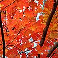 Under The Orange Maple Tree by Rona Black
