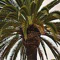 Under The Palm II by Ricky Barnard