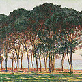 Under The Pines. Evening by Claude Monet
