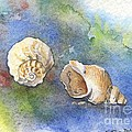 Under The Sea by Kathryn Dalziel
