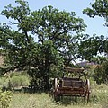 Under The Shade Tree by Mary Rogers